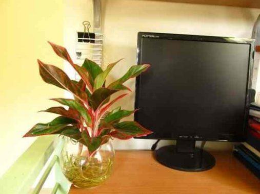 Top cây cảnh văn phòng hút tài lộc giúp sự nghiệp thăng tiến