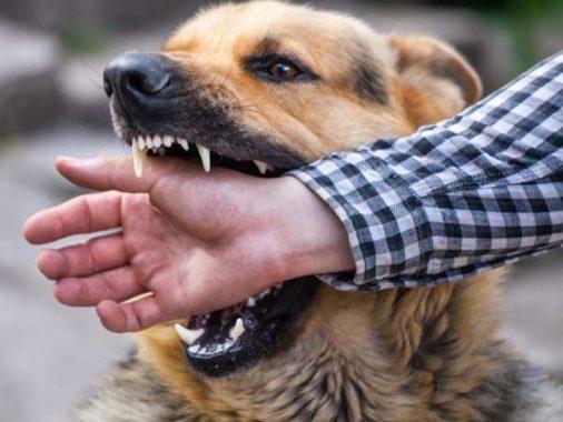 Mơ bị chó cắn – Giải mã giấc mơ thấy bị chó cắn đánh con gì dễ trúng