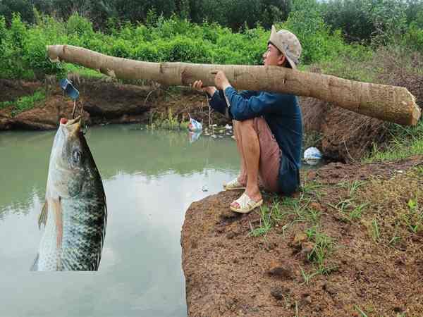 Mơ bắt cá là điềm báo gì - Mơ -bắt cá đánh số mấy dễ trúng nhất?