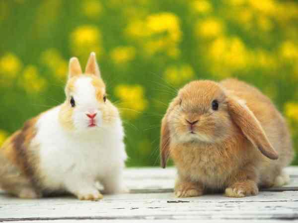Mơ thấy con thỏ là điềm báo gì