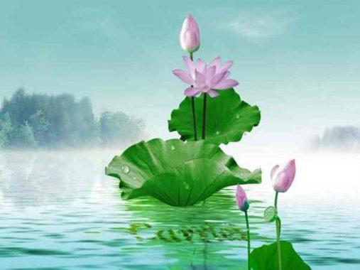 Mơ thấy hoa sen – Khám phá ý nghĩa của giấc mơ thấy hoa sen