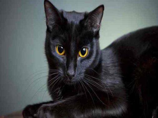 Mơ thấy mèo đen có phải điềm xấu – Mơ thấy mèo đen đánh con gì?
