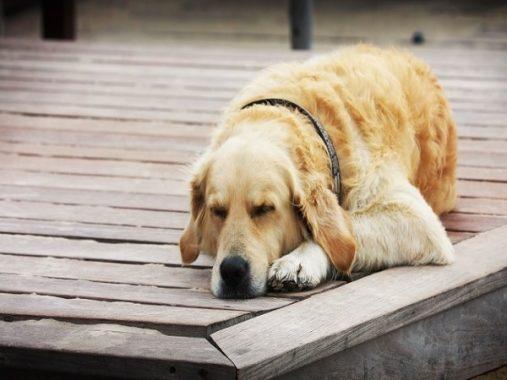 Nằm mơ thấy chó đánh con gì? Mơ thấy chó có ý nghĩa gì?