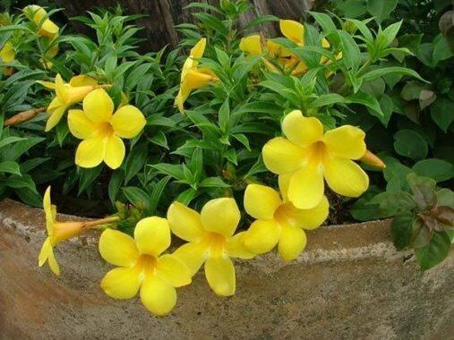 Nằm mơ thấy hoa màu vàng đánh con gì có điềm báo gì